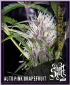 Short Stuff seedbank Auto Pink Grapefruit Strain Cannabis Seeds